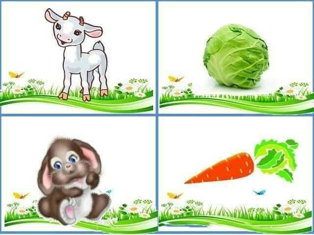 cu ce se hranesc animalele 1.jpg