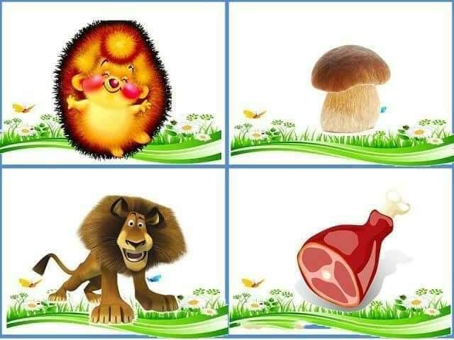 Cu ce se hranesc animalele 2.jpg