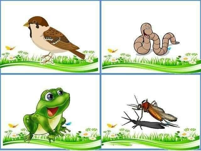 cu ce se hranesc animalele 8.jpg